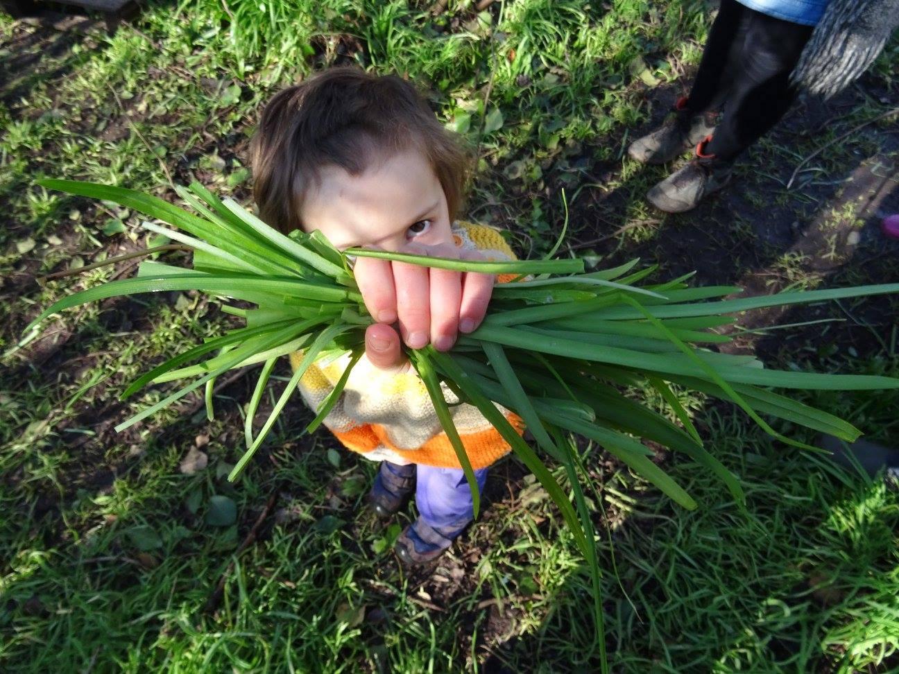 Wild garlic harvesting by Hetty