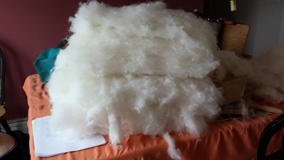 Rambouillet wool carded and blended with B bar C Angora wool