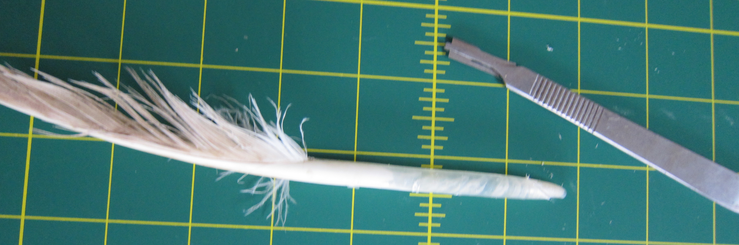 On the left, the winner of our bout, the quill. On the right, the defeated scalpel, sans head.