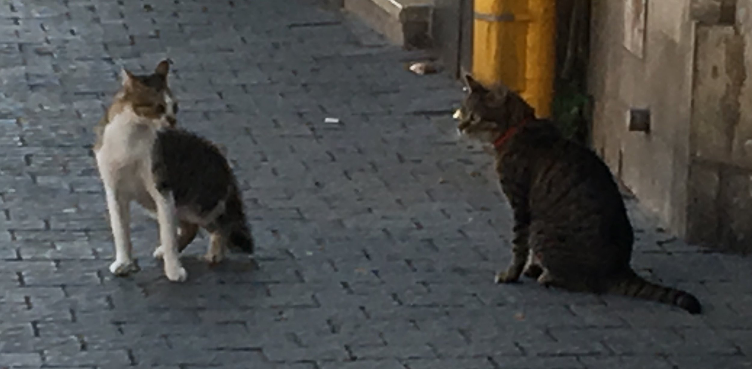 A solo cat and a cat who owns a person consider each other, rather like the cats in  The Aeronaut's Windlass . [Image shows a thin cat with a white belly and calico back staring down a much more well fed grey and black tabby with a red collar]