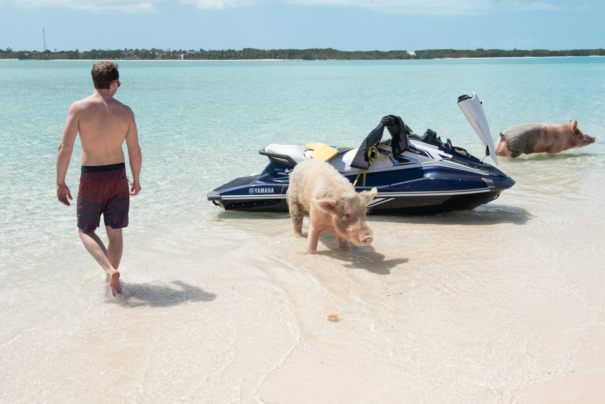 We were surpsied how aggressive the pigs were. They are used to the tourists bringing bread so they immediately swam towards us as we came in on the jet ski!!