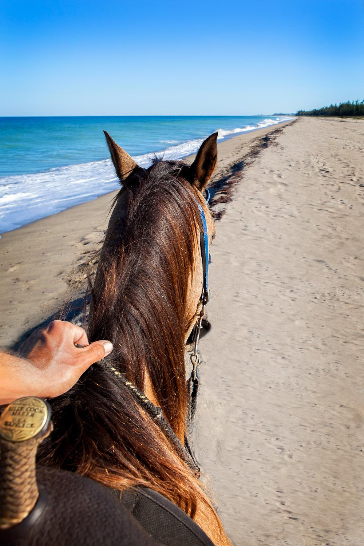 St Lucie Beach Tours on Horseback.jpg