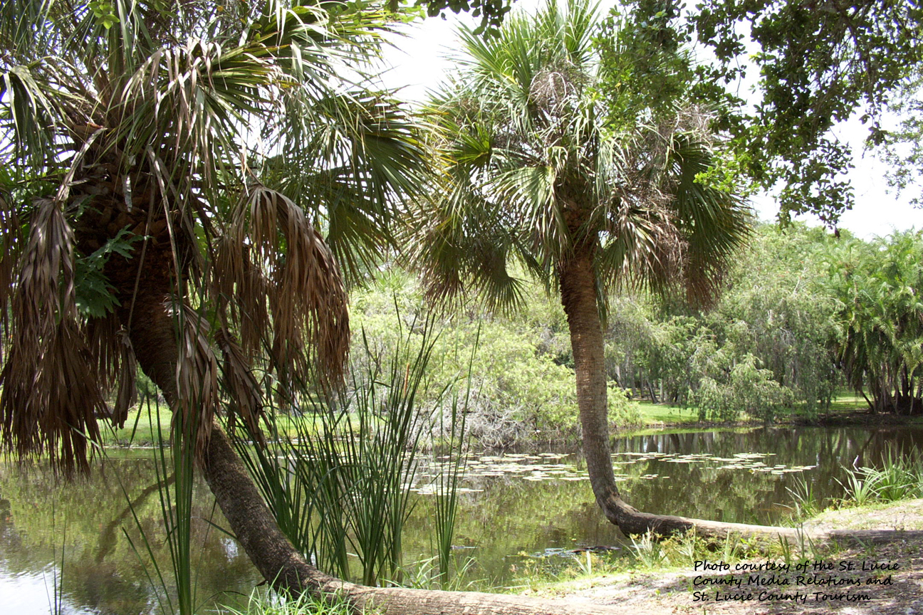 North_St_Lucie_River_edited-1.jpg