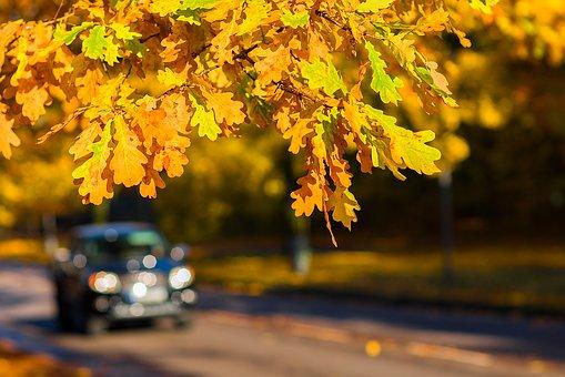 autumn-1804657__340.jpg