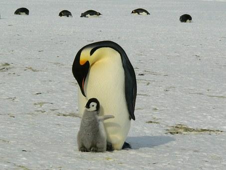 penguins-429134__340.jpg