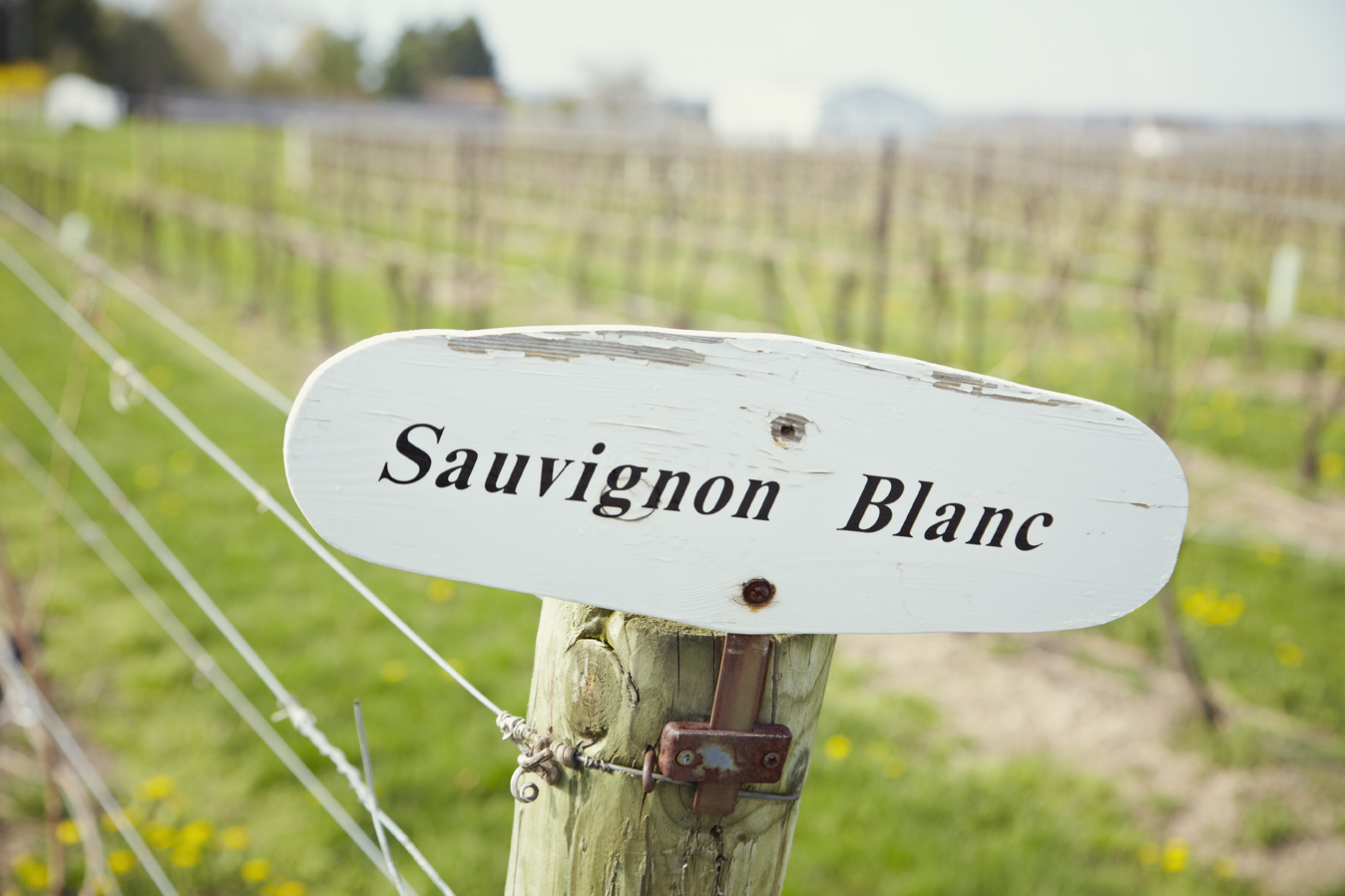 Sauvignon Blanc sign.jpg