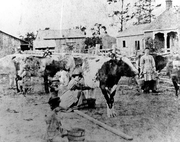 From the Price Farm, in what is now the Mississauga Valleys, c1900.jpg