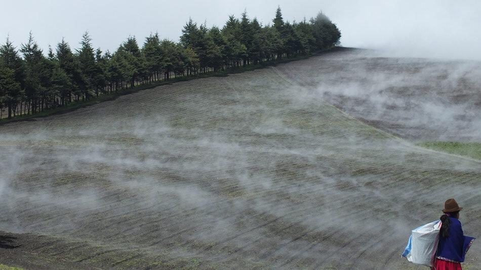 Fields with mist in Ecuador