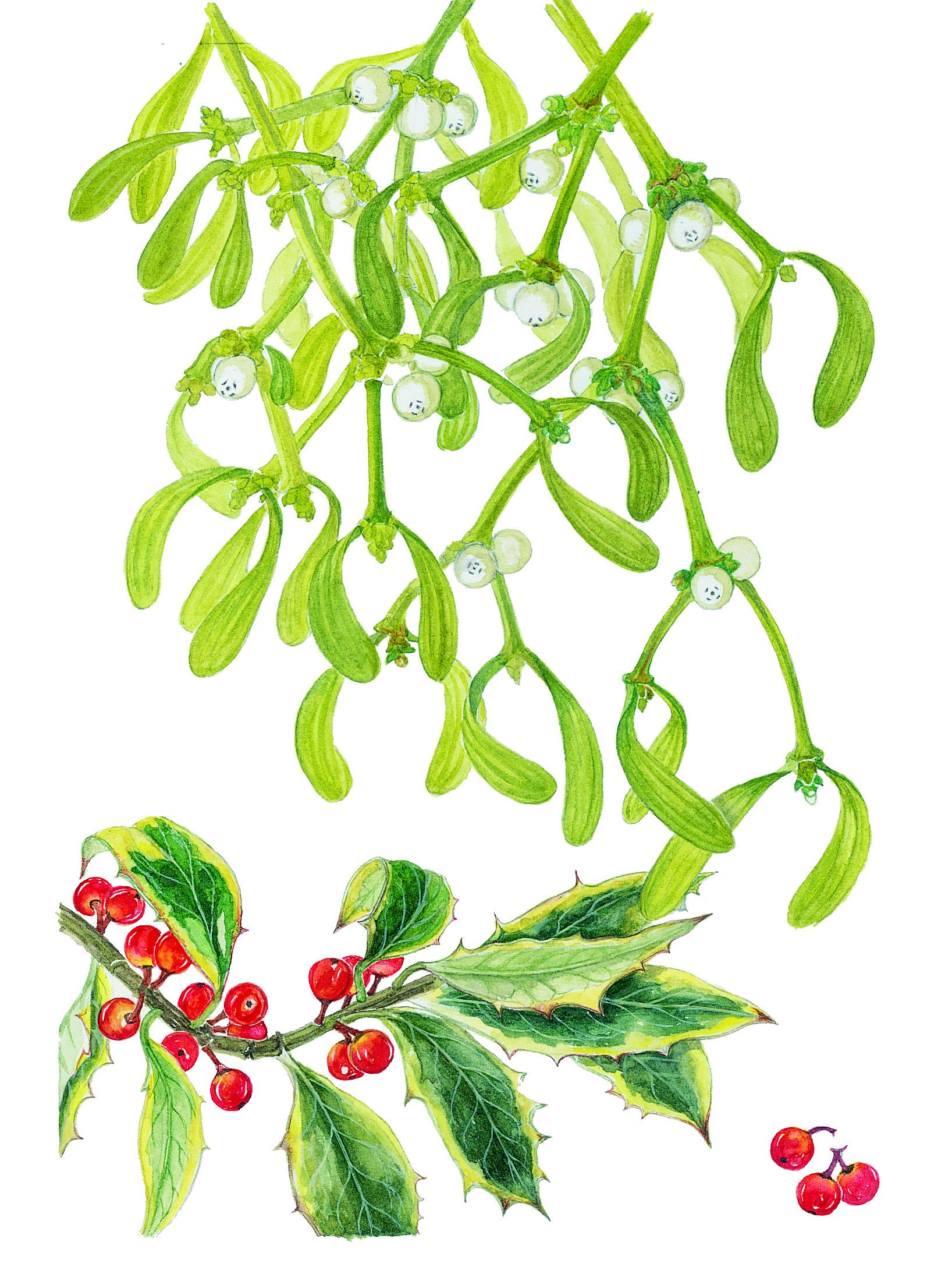 Mistletoe & Holly
