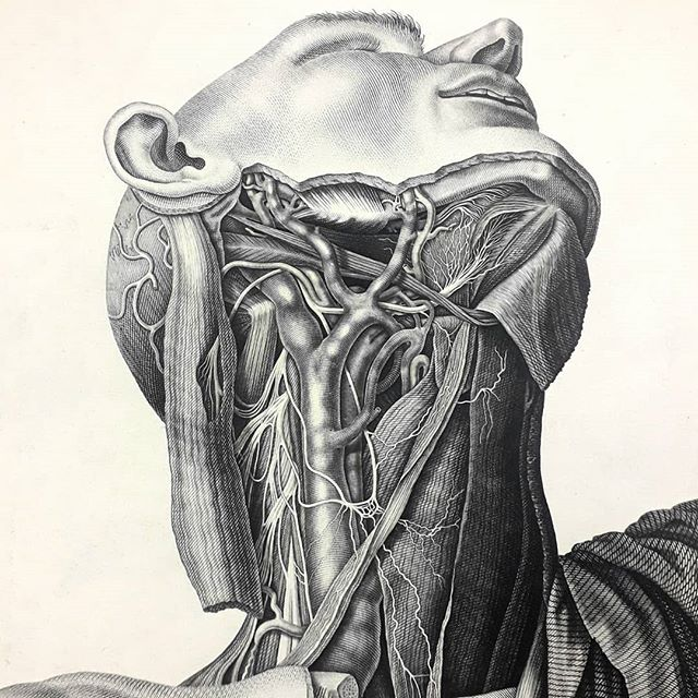 Beautiful original copper-plate engravings by anatomist #antonioscarpa at the Royal College of Physicians exhibition #undertheskin this week. The images depicted the heart's nervous system for the first time. Apparenly the ruthless Dr Scarpa locked the engraver #faustinoanderloni in a room until the work was finished 😱. #vintage #medicalillustration #anatomy #engraving #nerves #1794