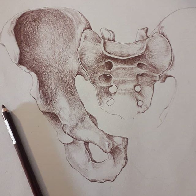 Fun Saturday night in with the pelvis and conte pencil 😇 #pelvis #conte #workinprogress #medicalart #sciart #medicalillustration #anatomy