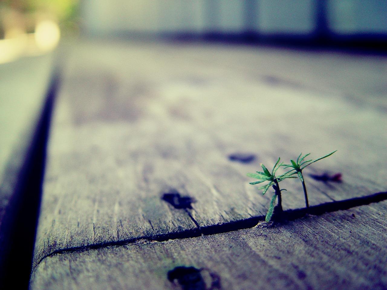 Wenn eine Pflanze es durch den Asphalt schafft, dann schaffst du das auch!