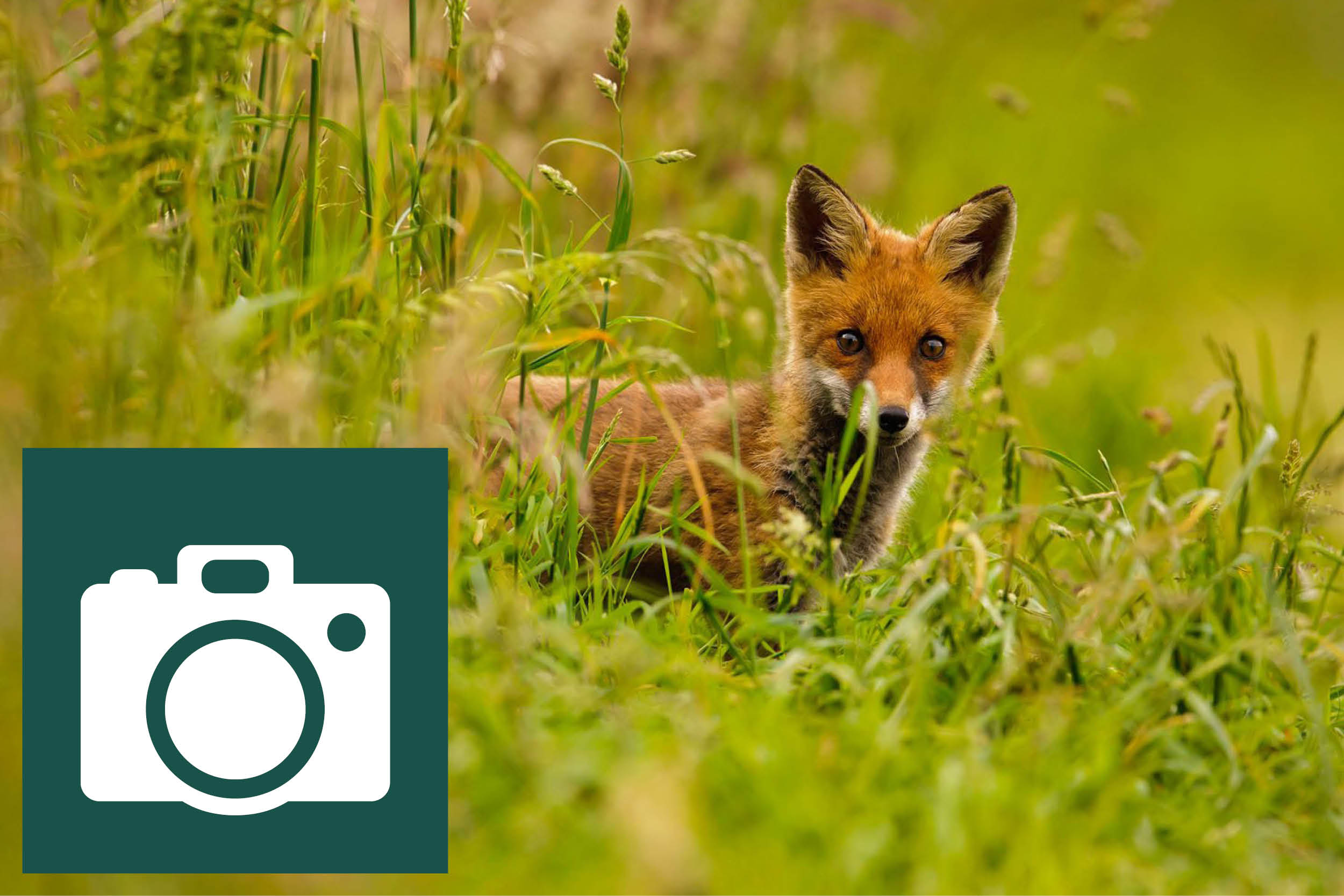 PHOTOGRAPHY  How is your photography? Why not put a small group of friends together, take a cottage, and have a weekend of learning and practical photography with a professional photographer among our fabulous wildlife in this beautiful historic parkland and river environment.  Take it one stage further perhaps; Have you ever wondered why it is so difficult to get close enough to photograph wildlife without frightening the animal or birds away? Why not come and learn from a qualified deer stalker how to get close to our amazing wildlife, including deer, otter, red squirrels, pine martins, kingfishers, dippers and various birds of prey. There are some purpose built hides for your comfort!!!
