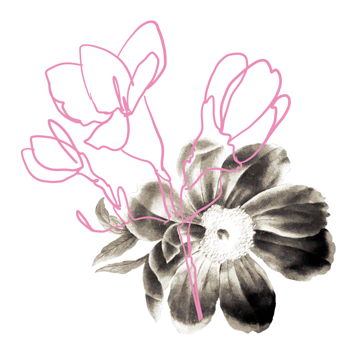 webflowers1-01.png