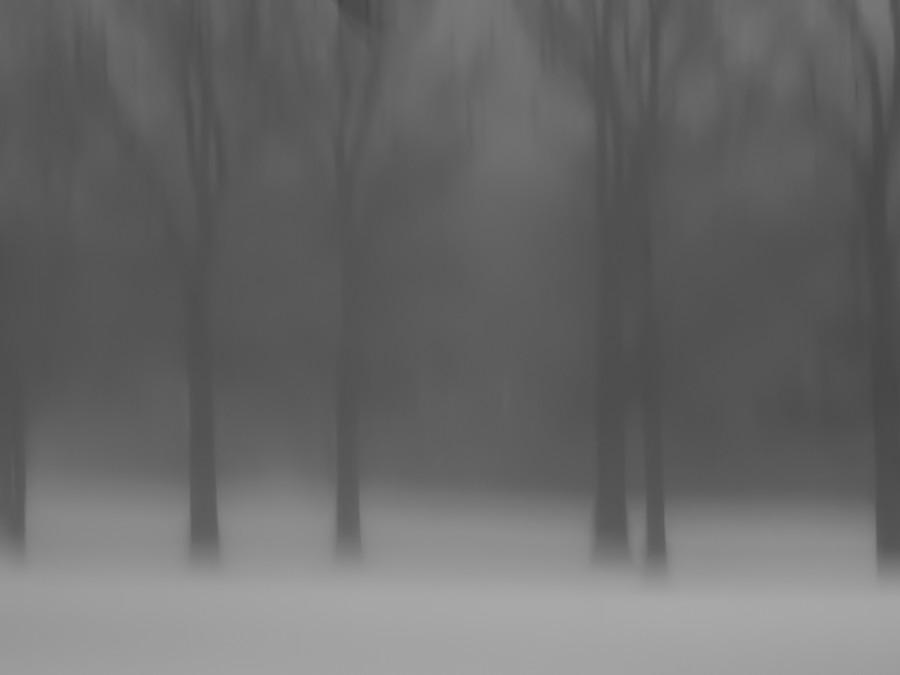 Black & White 6