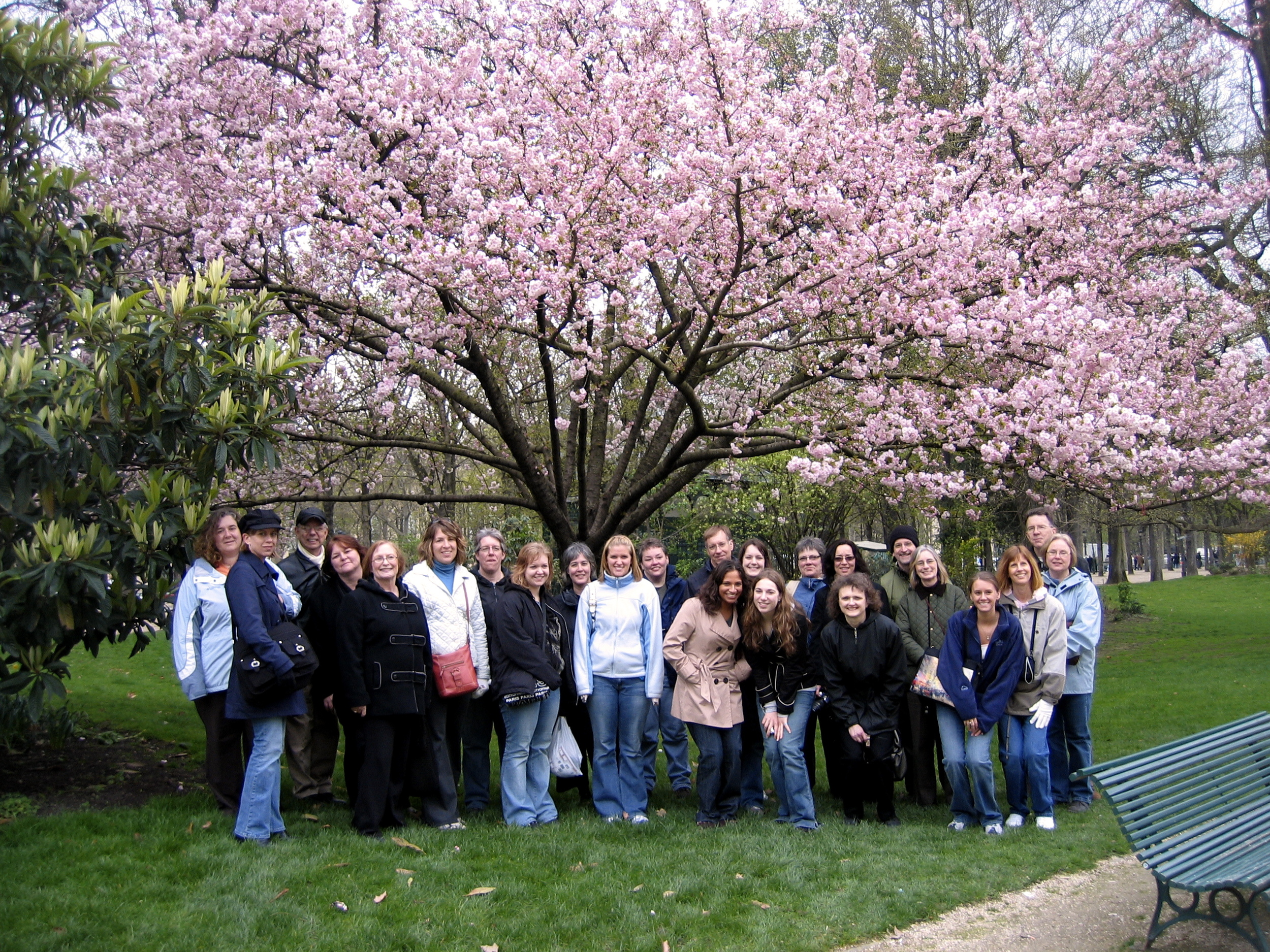 Under the magnolia tree.jpg