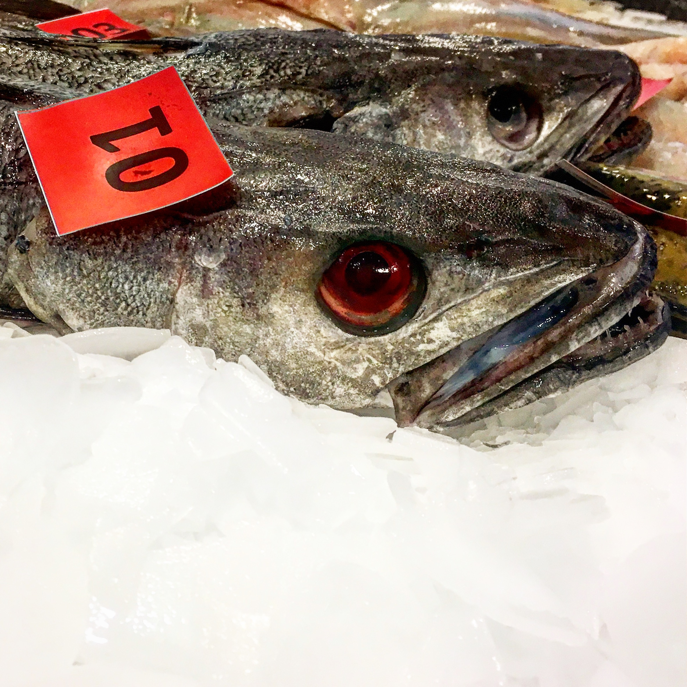 Day one of a six day shoot.  Billingsgate Market