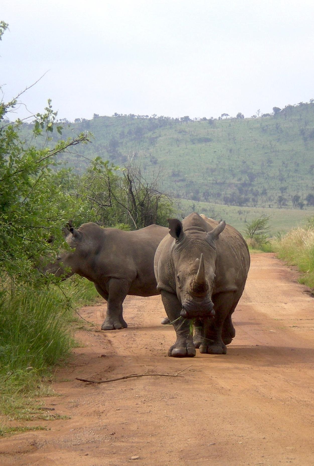 RhinoDuoImproved.jpg