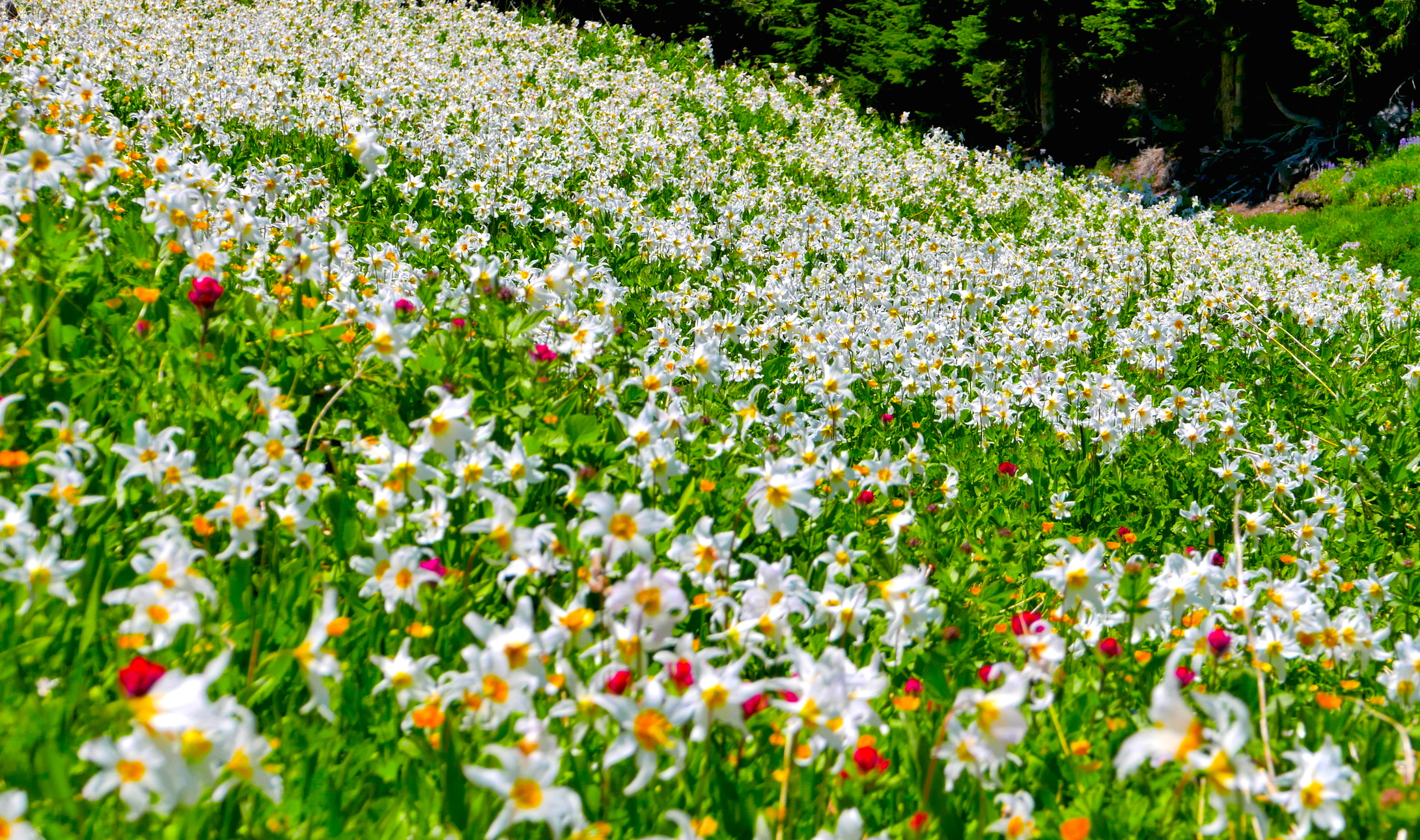 flower carpet on the Western Loop