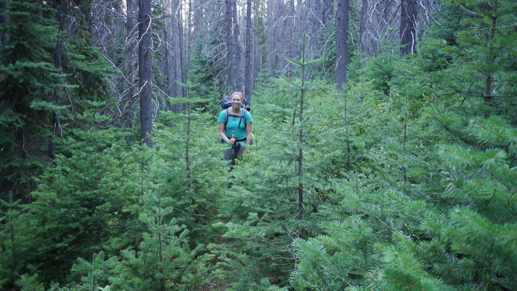 Rejuvenation: the forest rebuilds