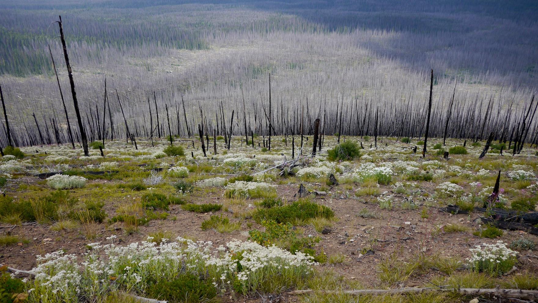stark beauty: aftermath of 2006 Tatoosh fire