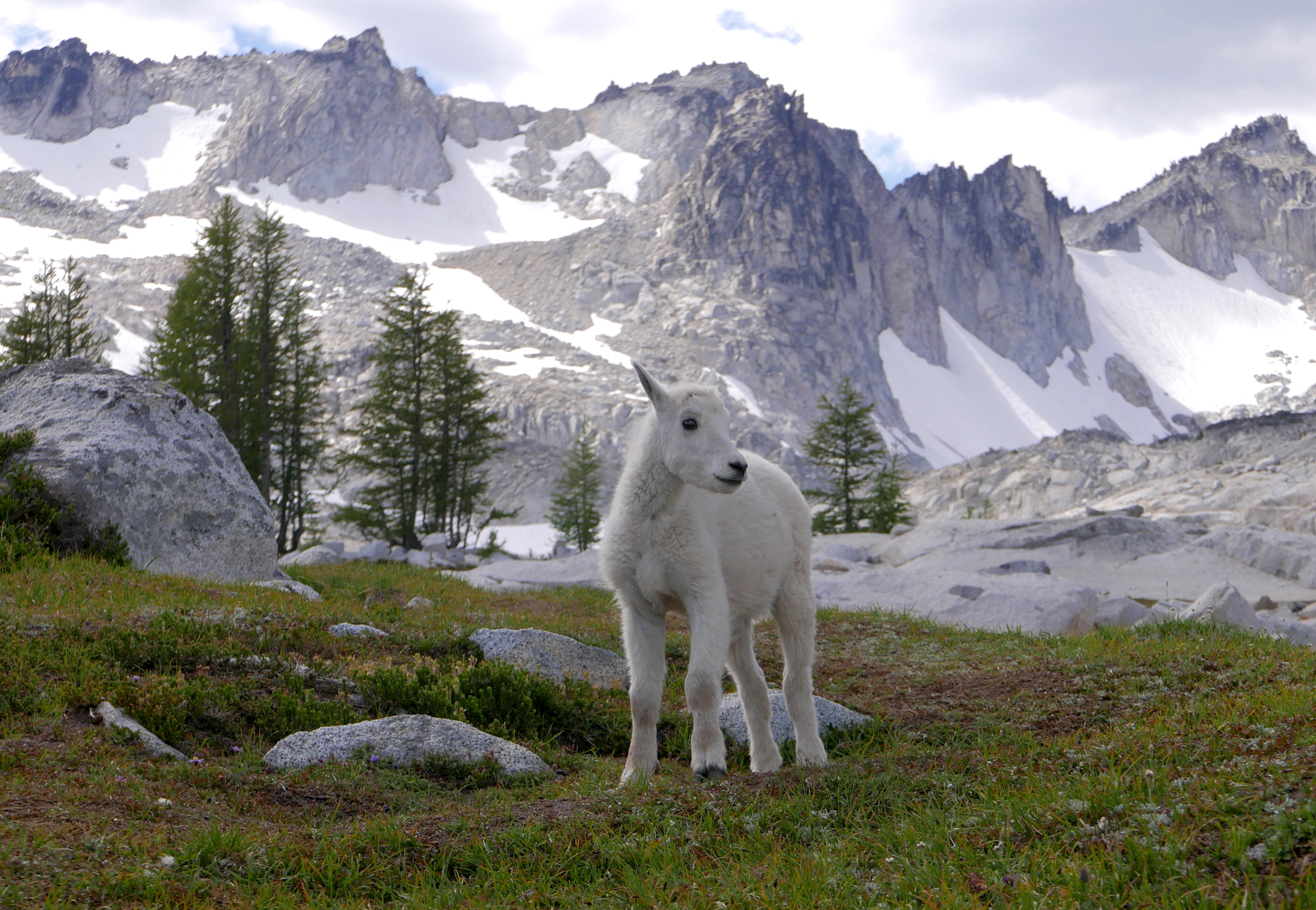 unconcerned kid in the Enchantments