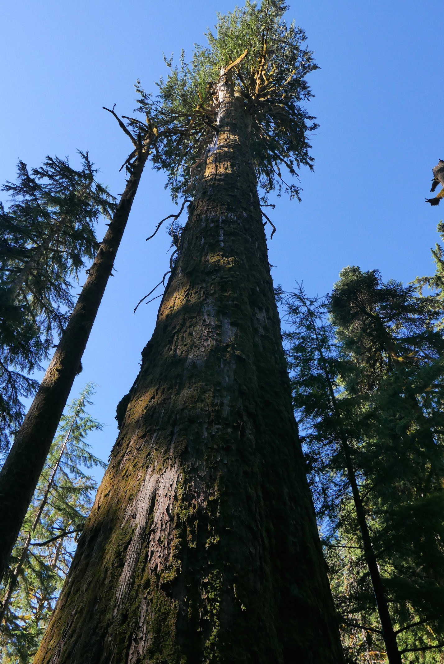 impressive old growth