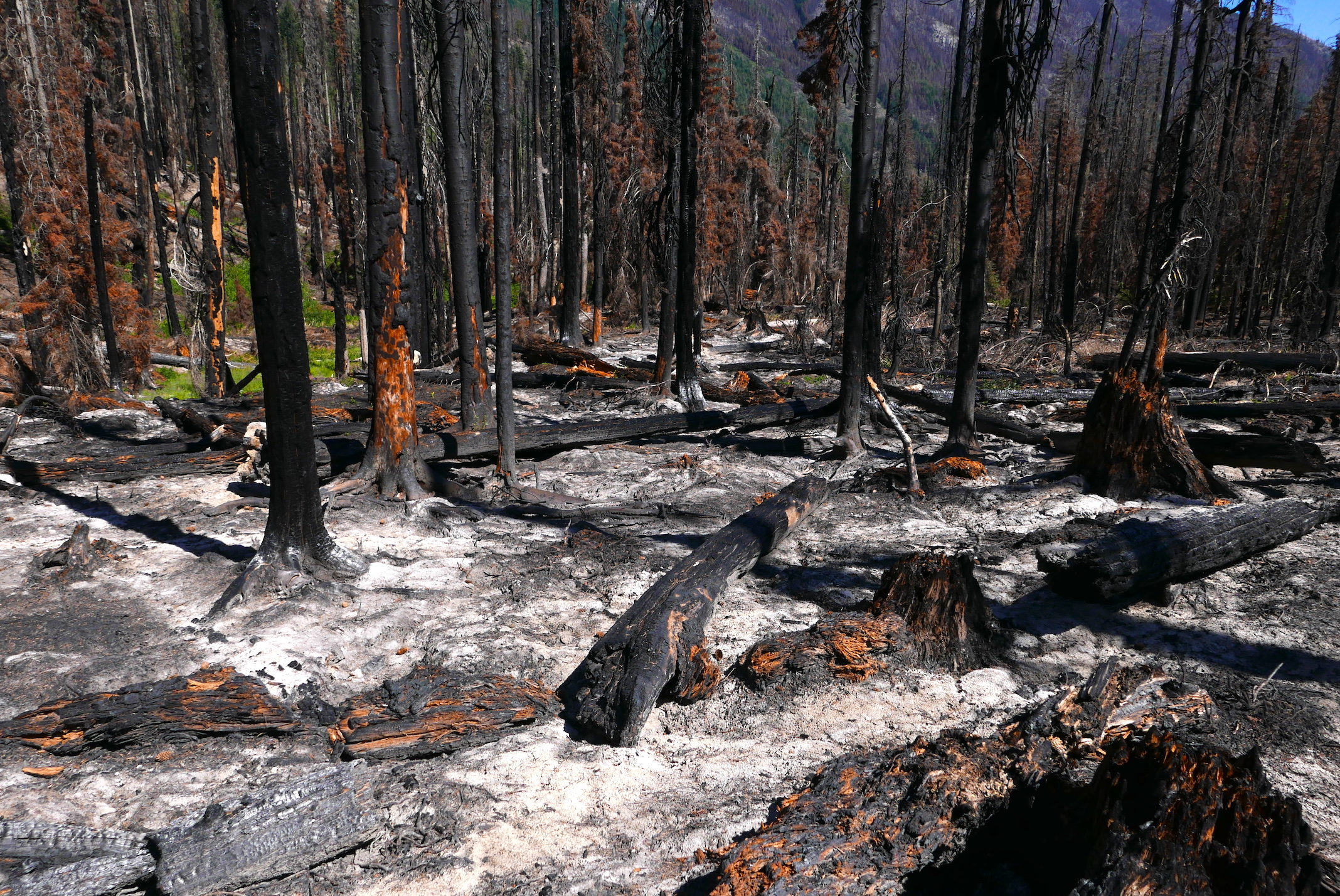 ashes from the Aug 2016 Buck Creek fire