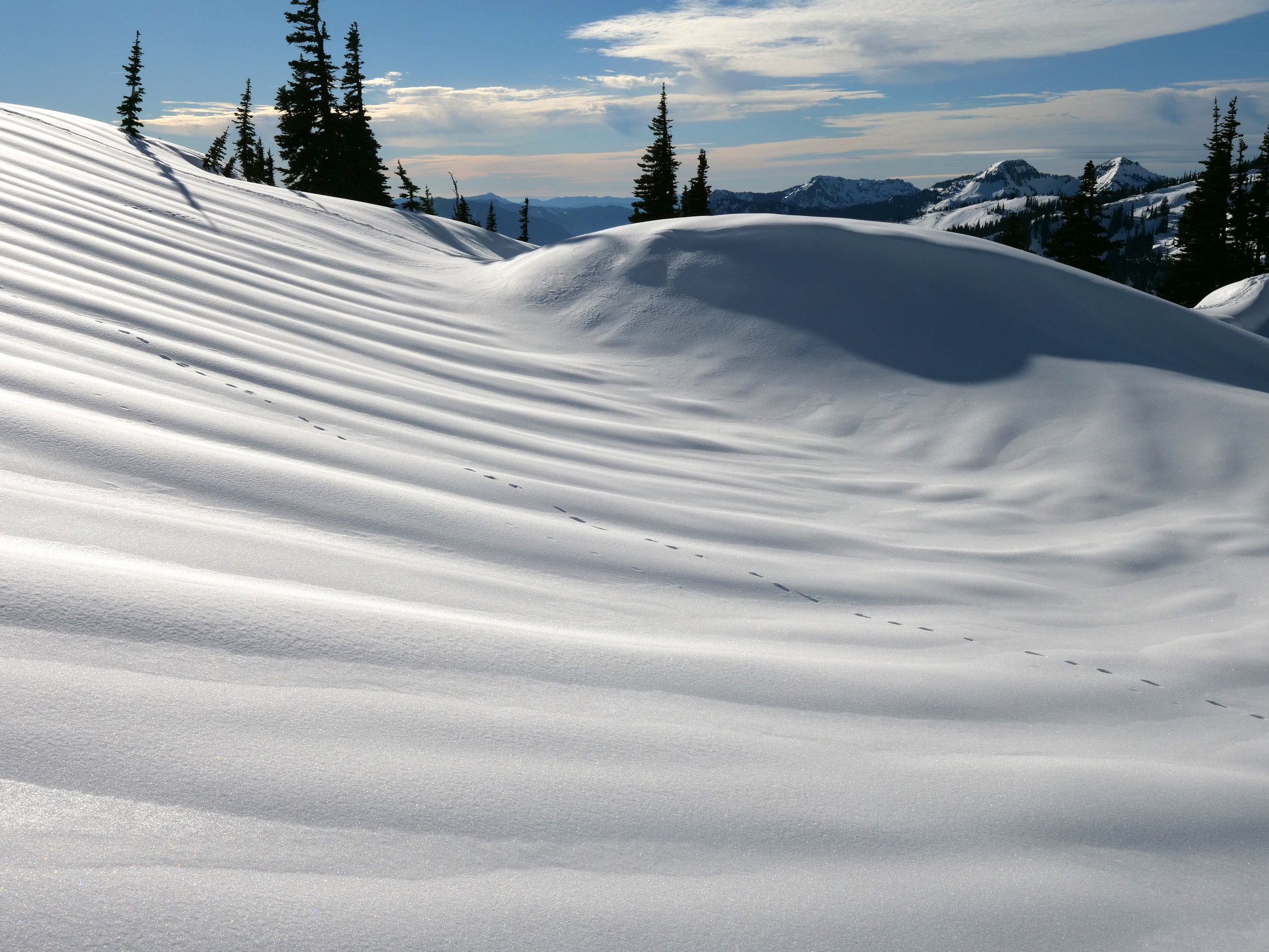 Tracks in the winter playground of Paradise.