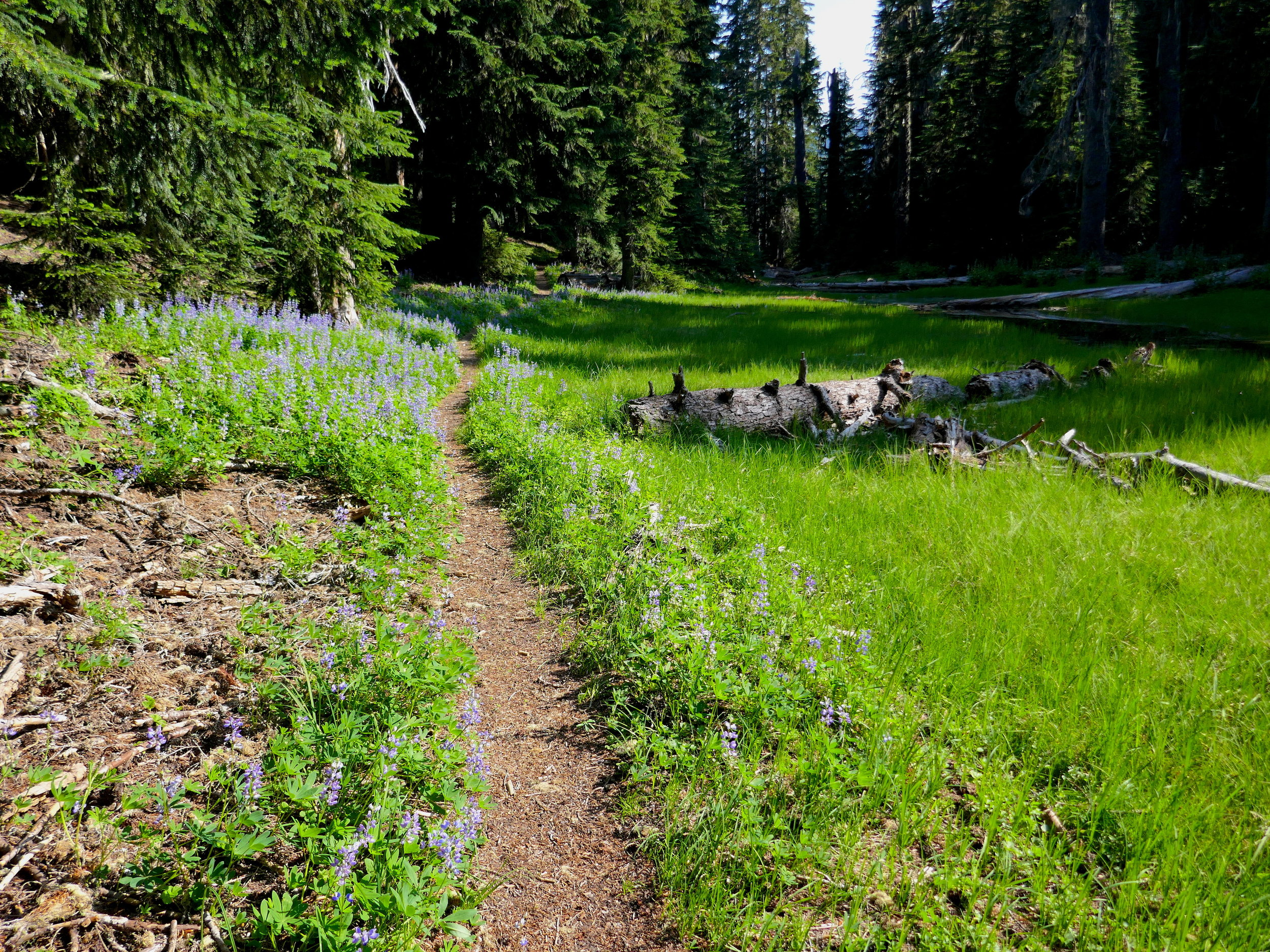 Laughingwater Creek Trail prior to 3 Lakes