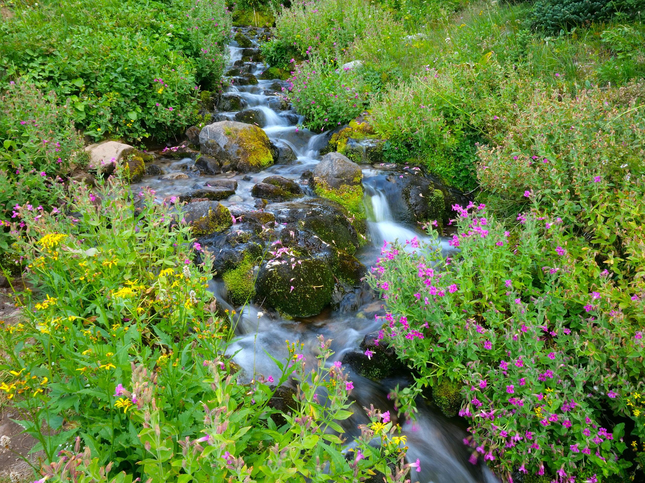 Lodi Creek nourishes a constant bloom even late season