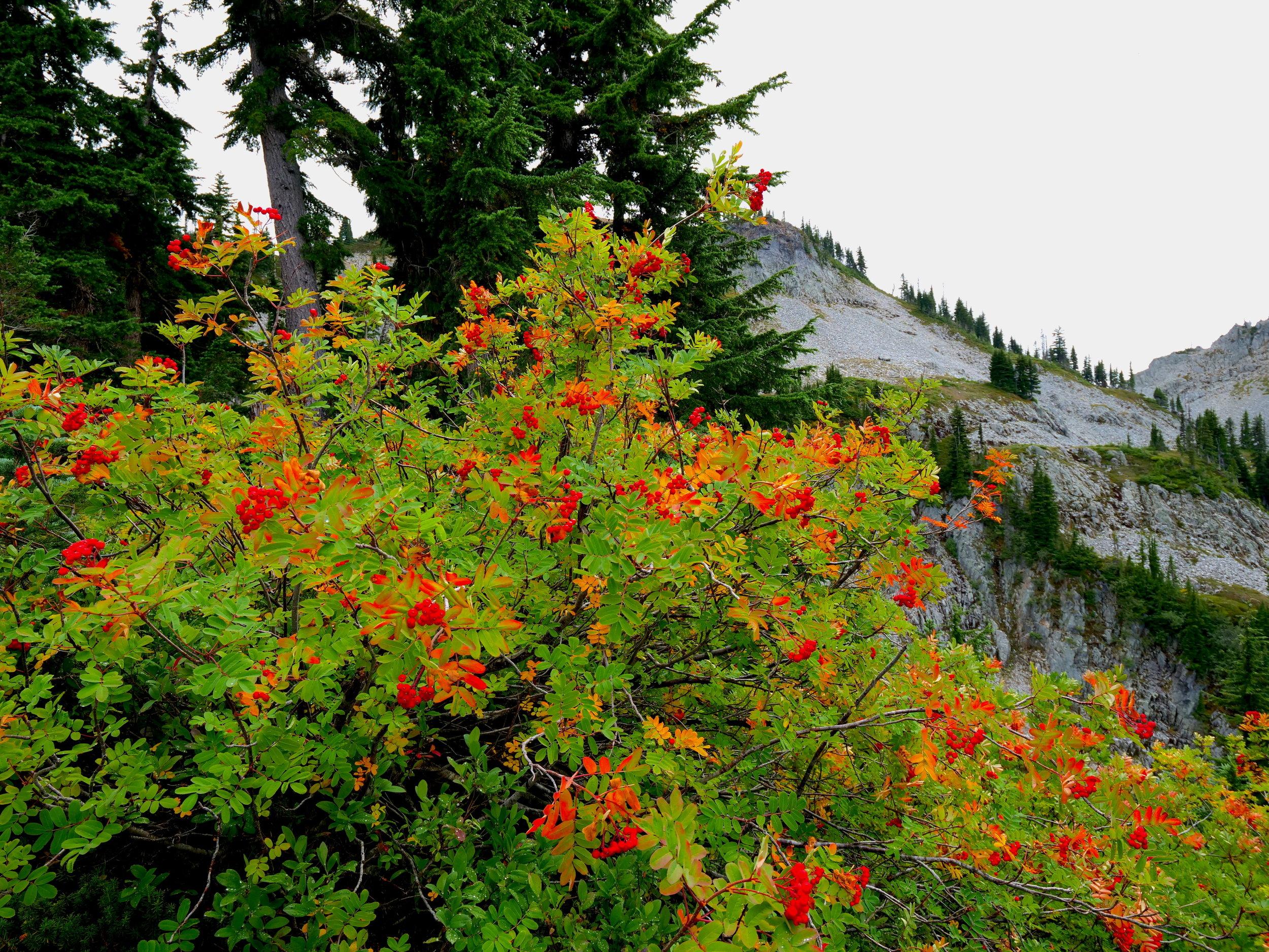 Color on the Pinnacle Peak trail