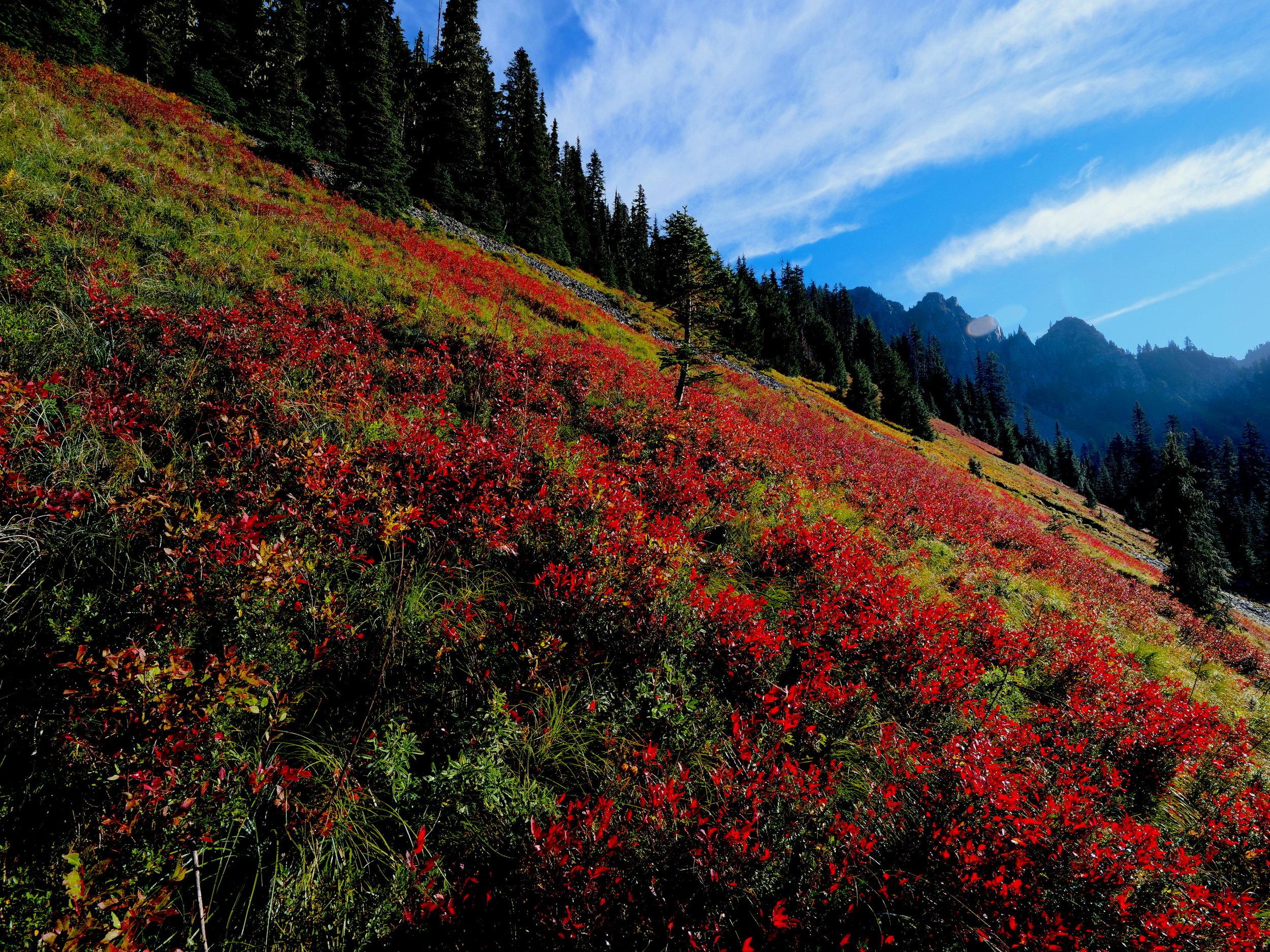 Fall colors on the Eagle Peak Trail, Mt. Rainier National Park