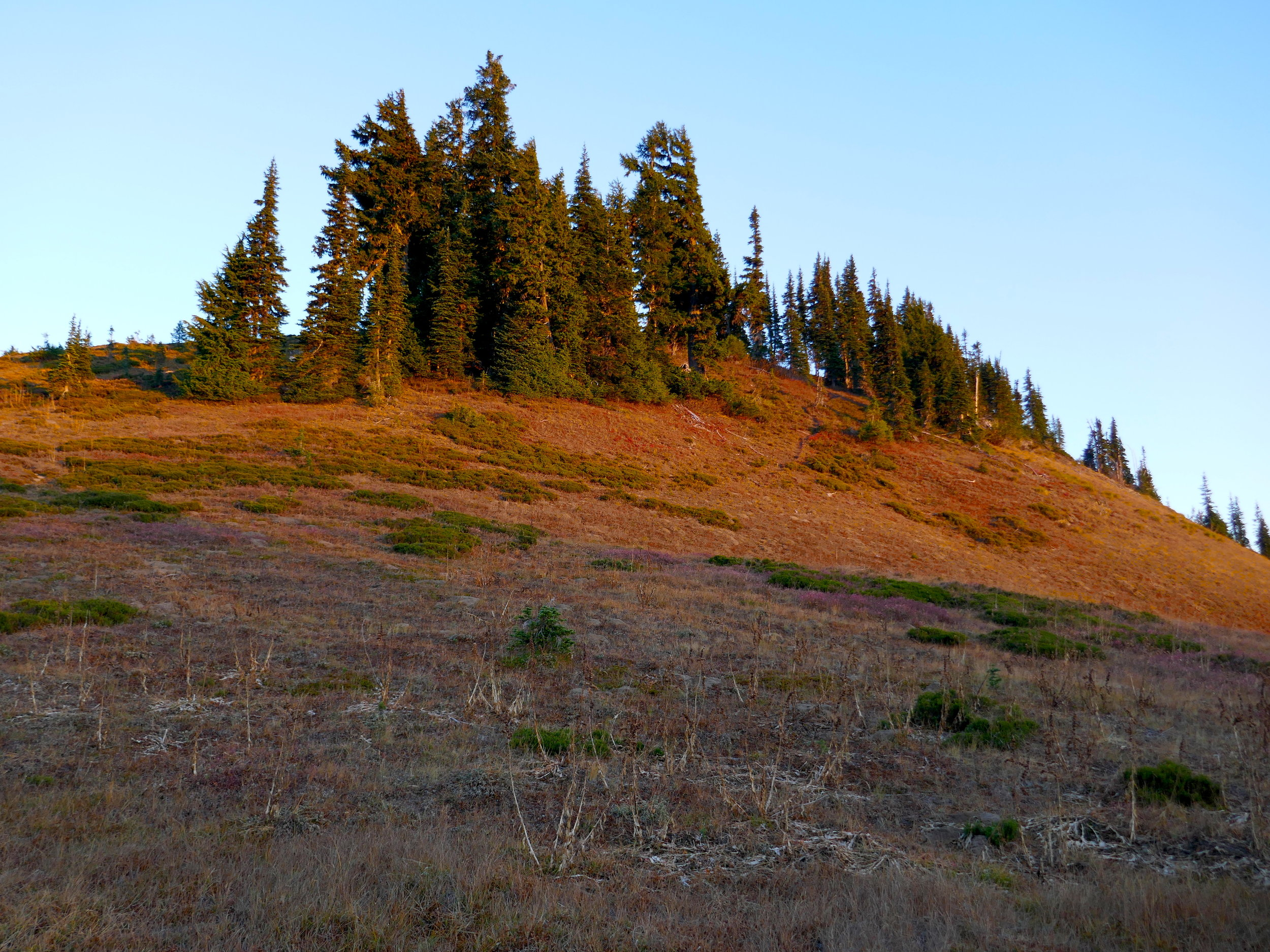 Alpenglow on Point 5920: Wonderland Trail above Indian Bar