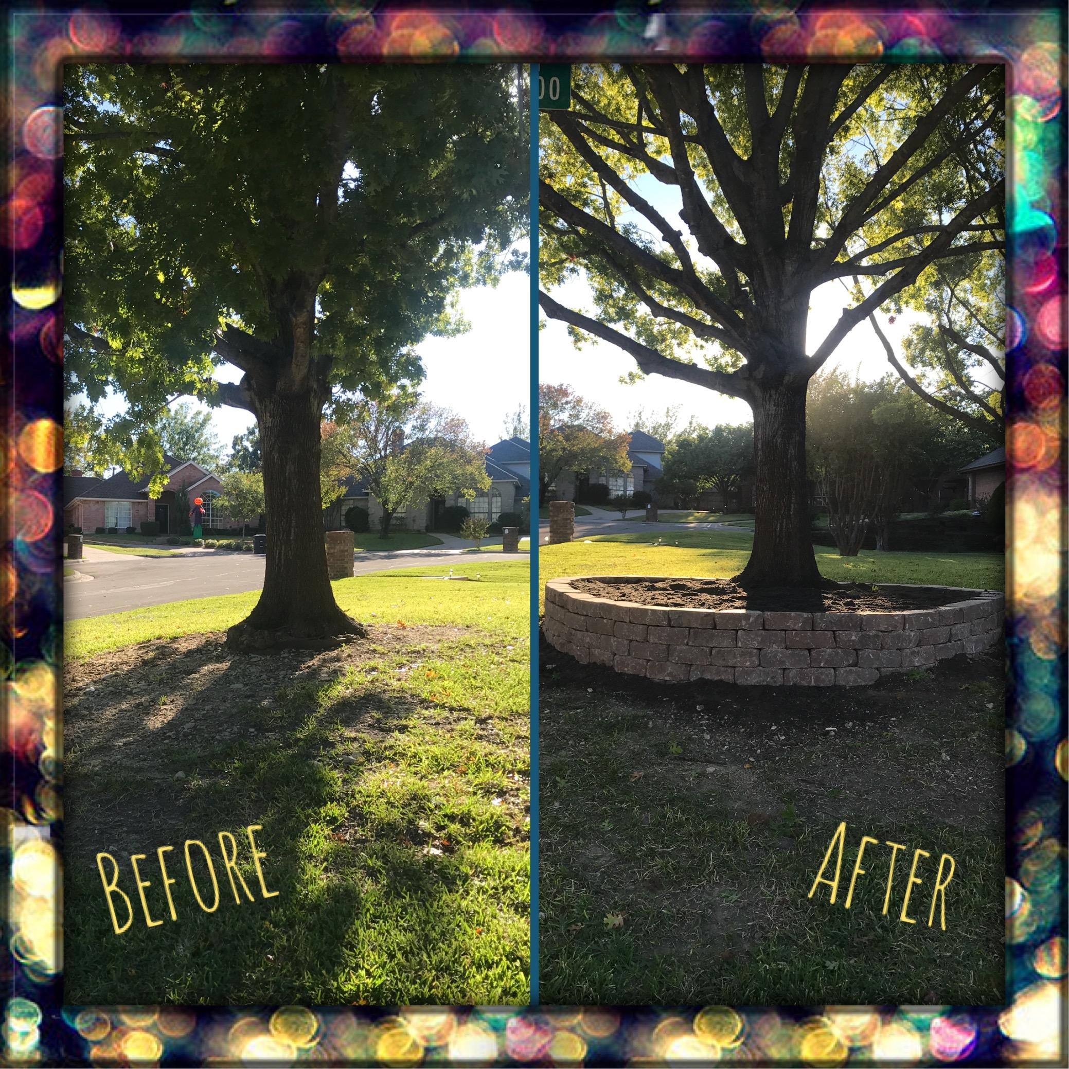 tree b&a.JPG