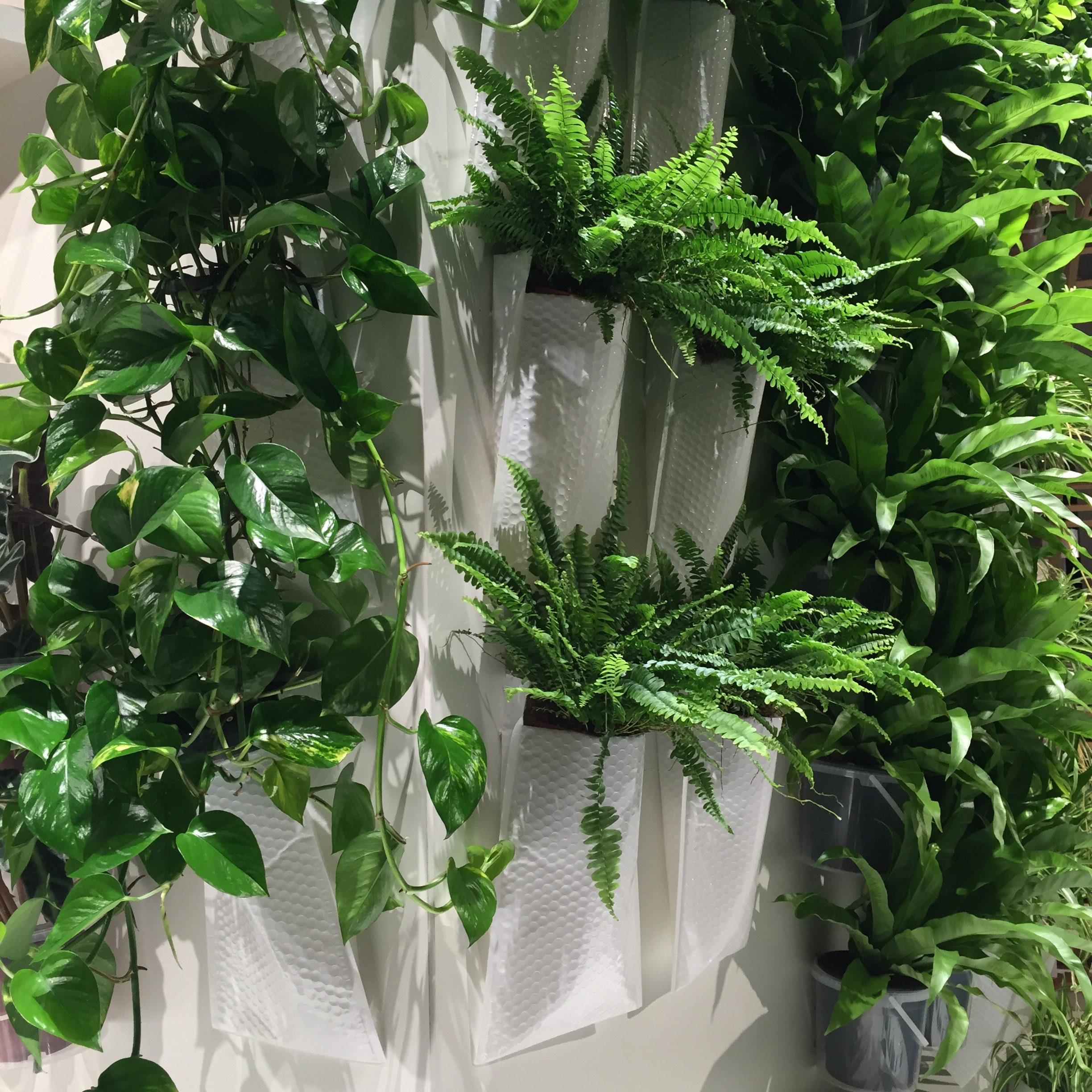 Many of the plants are hanging in white bubble shipping envelopes - clever!