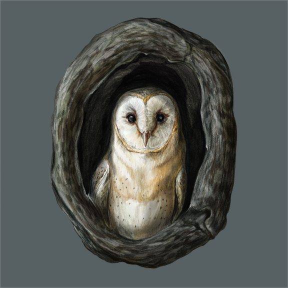 O - OWL_72.jpg