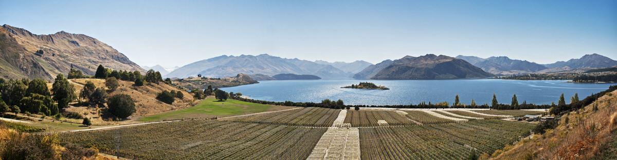 rippon-vineyard-photo.jpg
