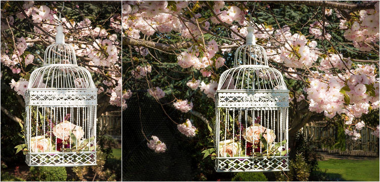 spring-blossom-wanaka-26.jpg