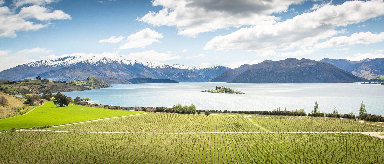 rippon-vineyard-enagement-proposal-04.jpg