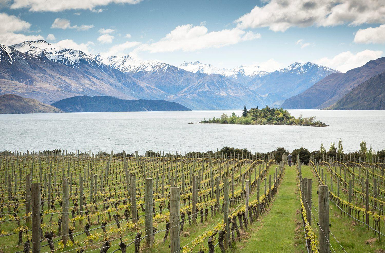 rippon-vineyard-enagement-proposal-05.jpg