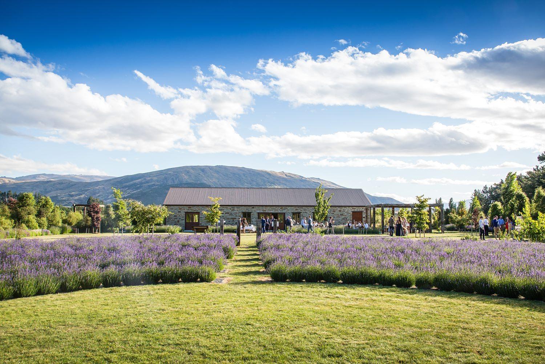 wanaka-lavender-farm-wedding-25.jpg
