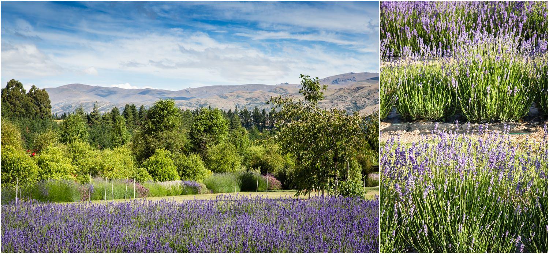wanaka-lavender-farm-wedding-42.jpg