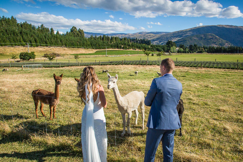 wanaka-lavender-farm-wedding-44.jpg