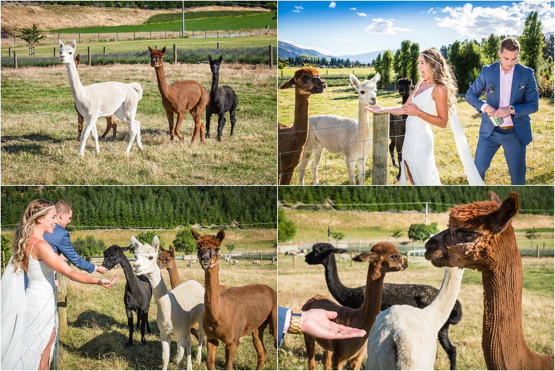 wanaka-lavender-farm-wedding-45.jpg