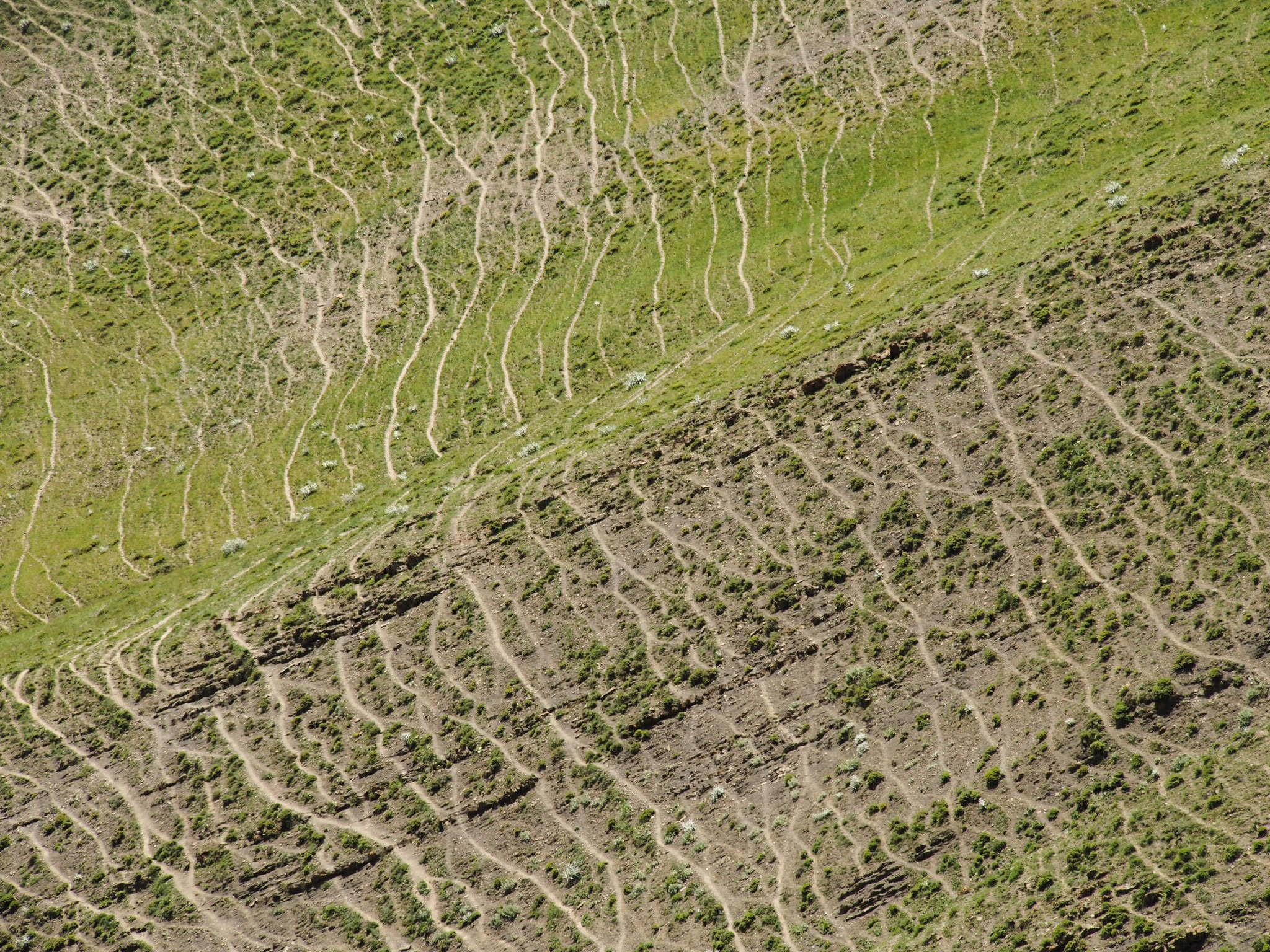 cattle-track-xınalıq-azerbaijan.jpg