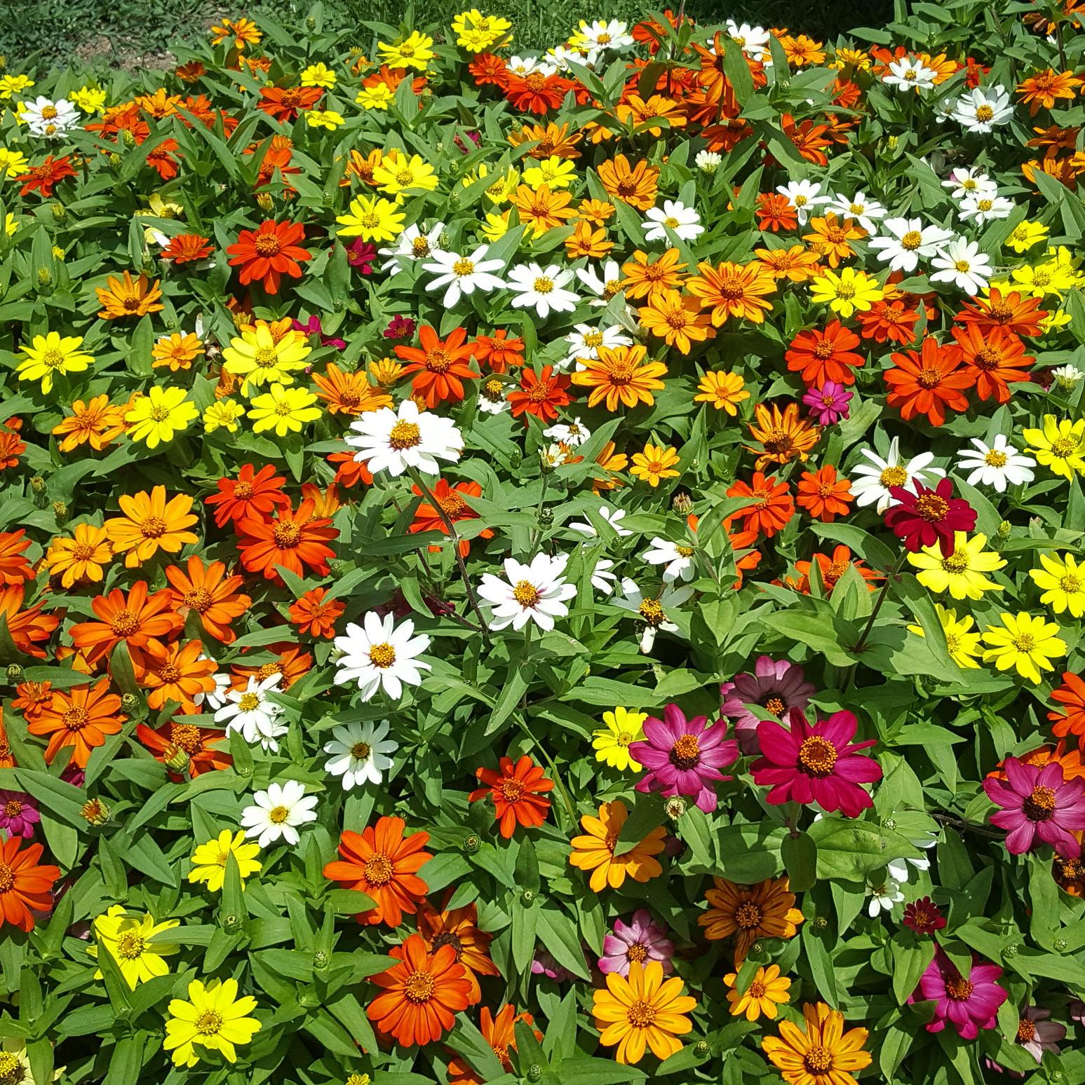 colourful-flowers-batumi-georgia.jpeg