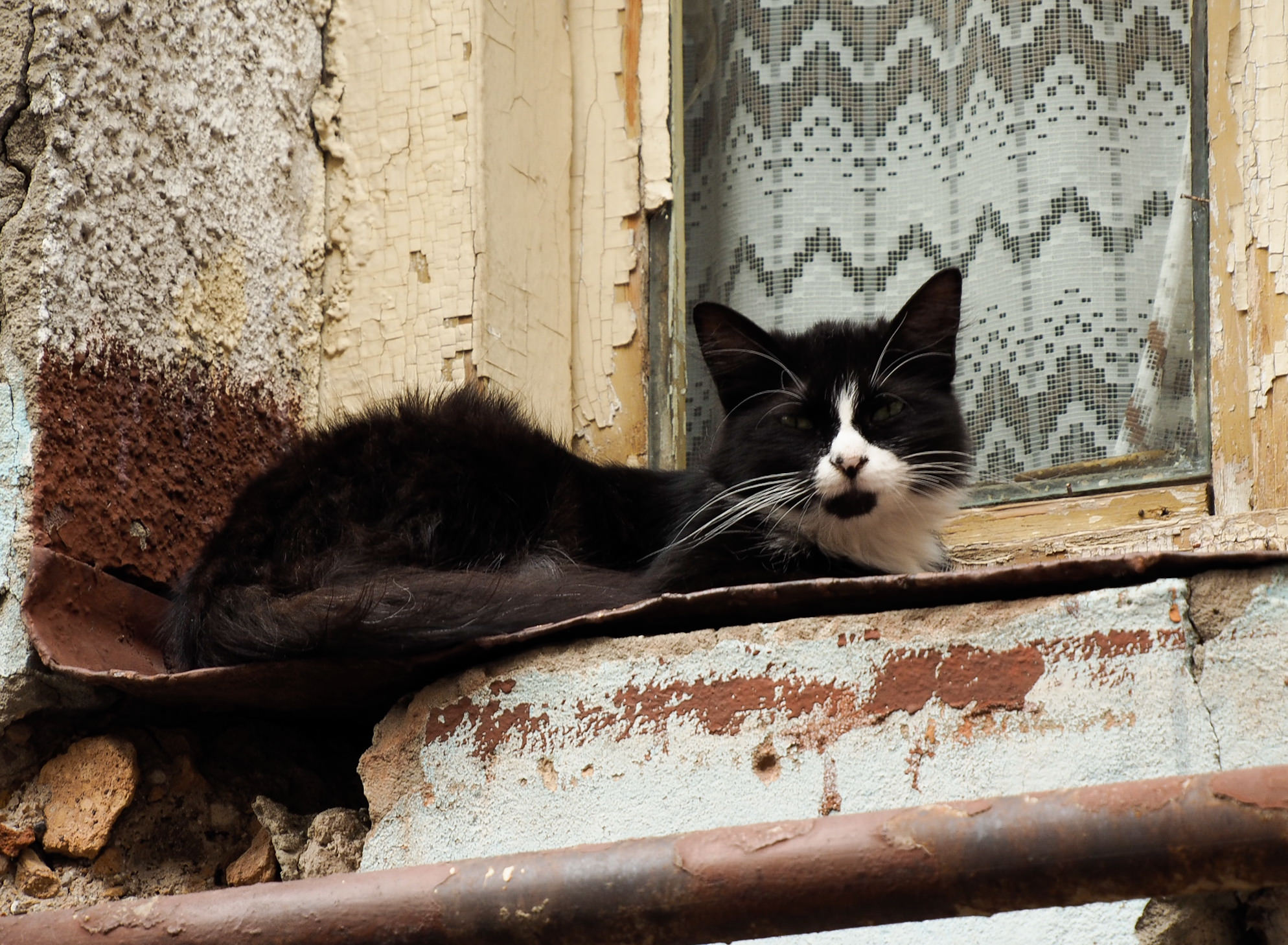 Backstreet cat Tbilisi Georgia