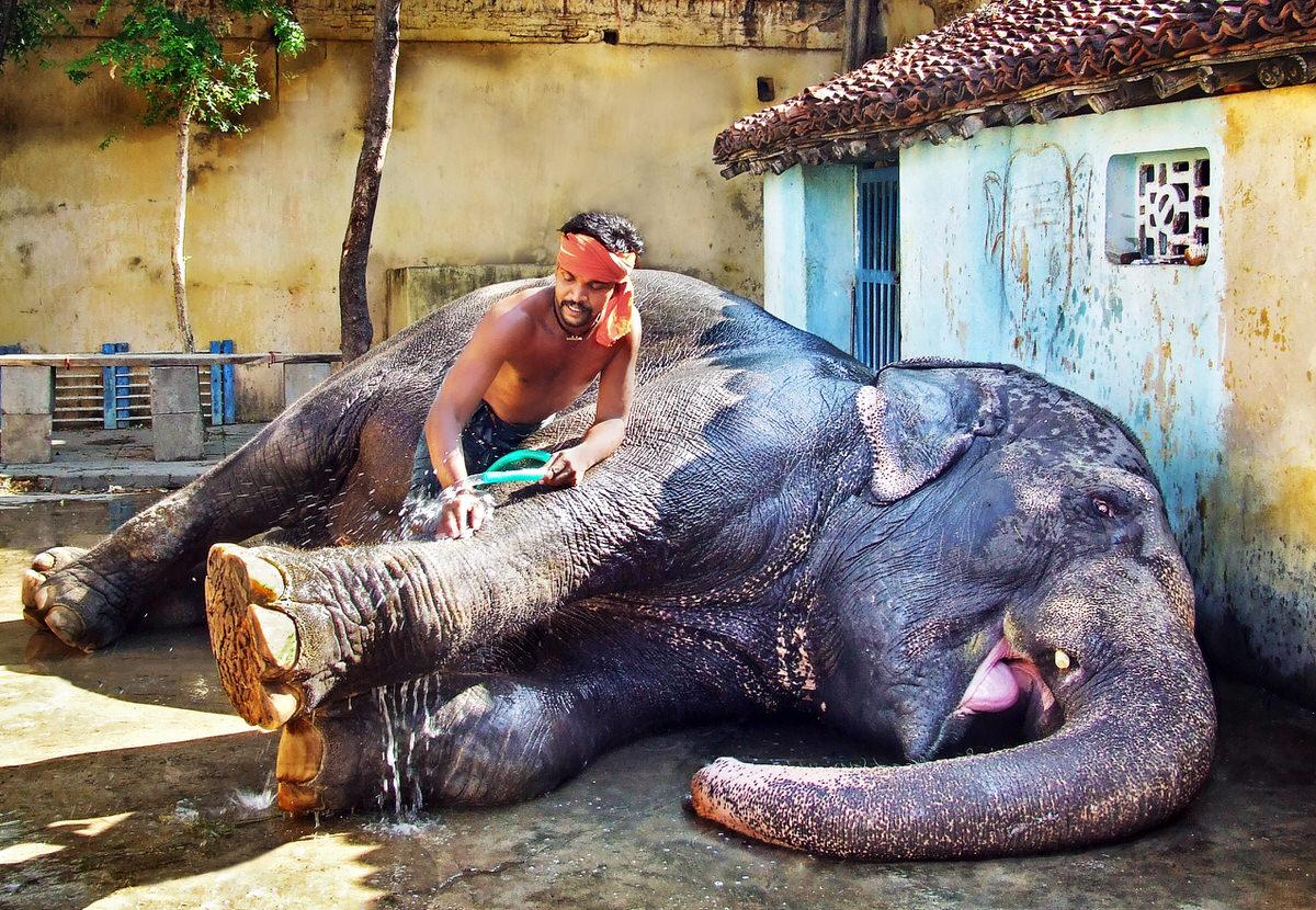 elephant-washtime-photo.jpg