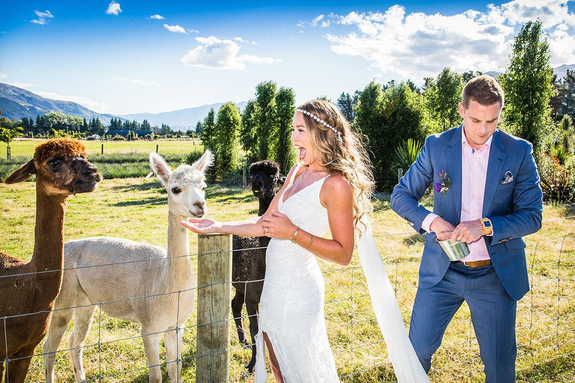 008-bride-groom-alpaca.jpg